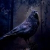 MidnightCrow